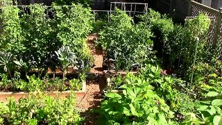 building a vegetable garden in your backyard